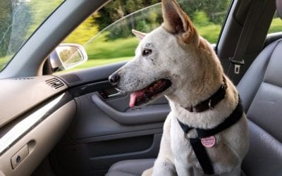Traveling With a Pet? Prepare Your Vehicle and Yourself